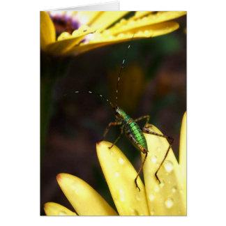 Baby Katydid Leap of Faith Note Card