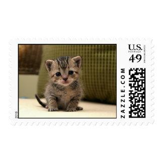 Baby Kitten Stamps