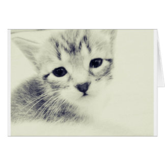 Baby Kittens Greeting Cards