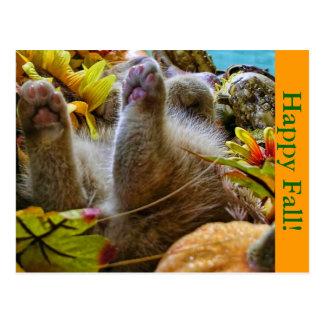 Baby Kitty Cat Kitten, Supine Position,Fall Leaves Postcard