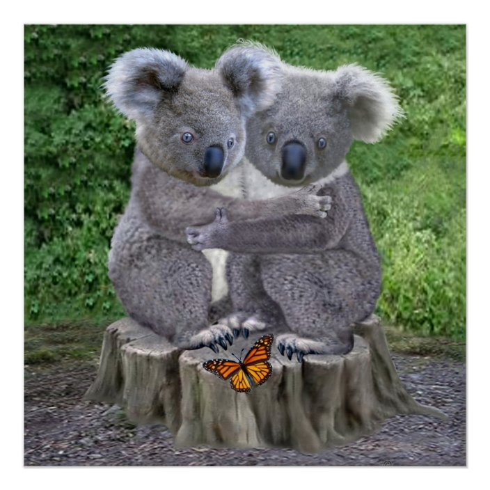 Baby Koala Bear Huggies Poster Zazzle Com