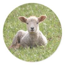 Baby Lamb Classic Round Sticker