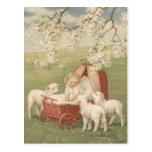 Baby Lamb Dogwood Tree Field Postcard