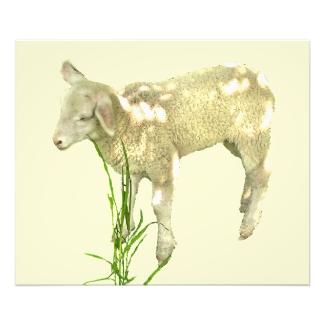 Baby Lamb in Grass on Yellow Photo Print
