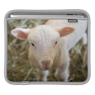Baby Lamb iPad Sleeves