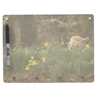 Baby Lamb Sheep Farm Animals Dry Erase Board With Keychain Holder