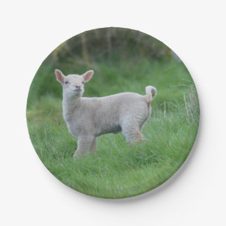 Baby Lamb 7 Inch Paper Plate
