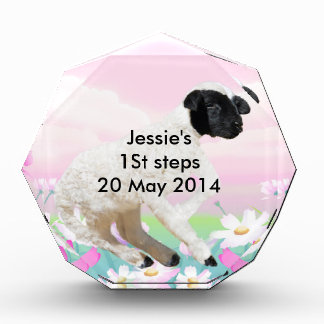 Baby Lambs first steps Awards