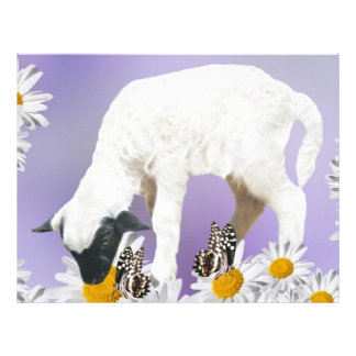 Baby Lambs first steps Letterhead