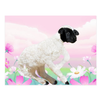 Baby Lambs first steps Postcard