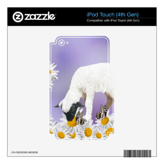 Baby Lambs first steps Decals For iPod Touch 4G