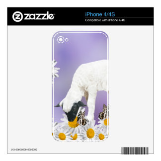 Baby Lambs first steps iPhone 4 Skin