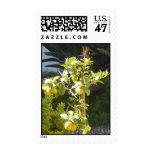 Baby Lemon Tree Postage Stamp