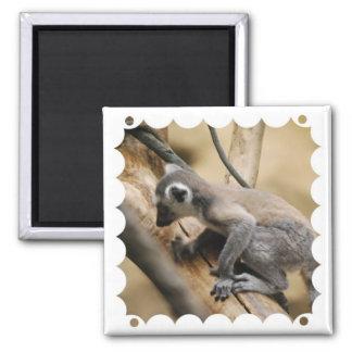 Baby Lemur  Magnet