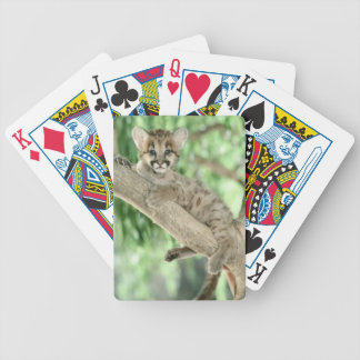 Baby Leopard Playing Cards