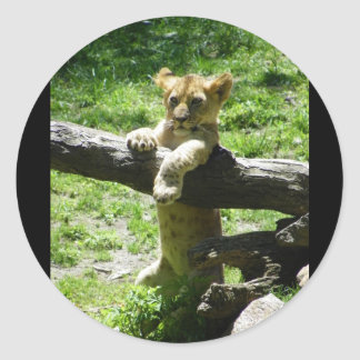 Baby Lion Cub On Branch Round Stickers