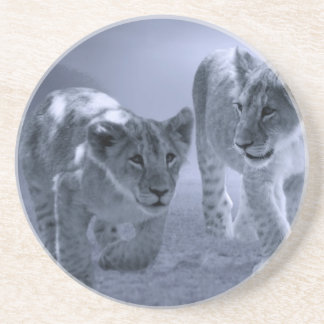 Baby lion cubs at play drink coaster