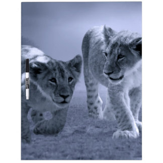Baby lion cubs at play dry erase whiteboard