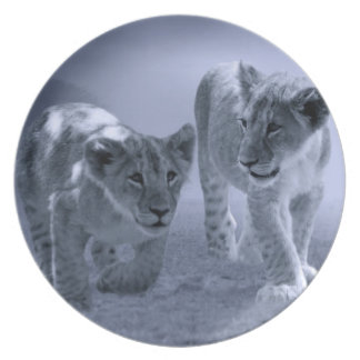 Baby lion cubs at play melamine plate