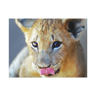 Baby lion cubs hungry gallery wrapped canvas