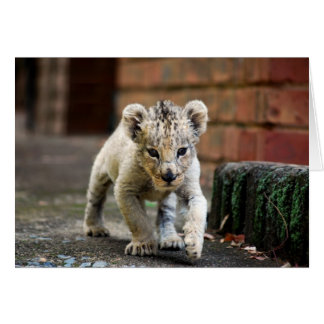 Baby lion prowler card