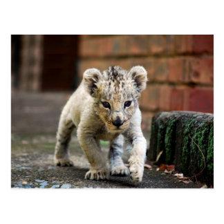 Baby lion prowler postcard