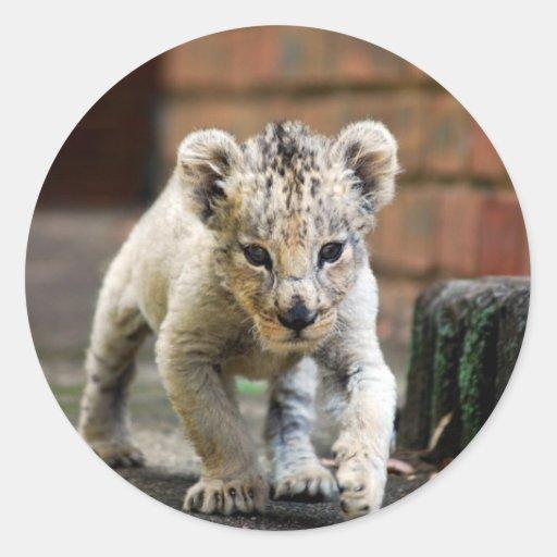 Baby lion prowler round sticker