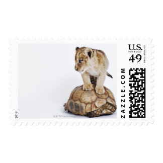 Baby lion standing on tortoise, white background stamp