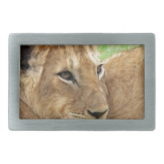 Baby Lion Young Wild Animal Belt Buckle