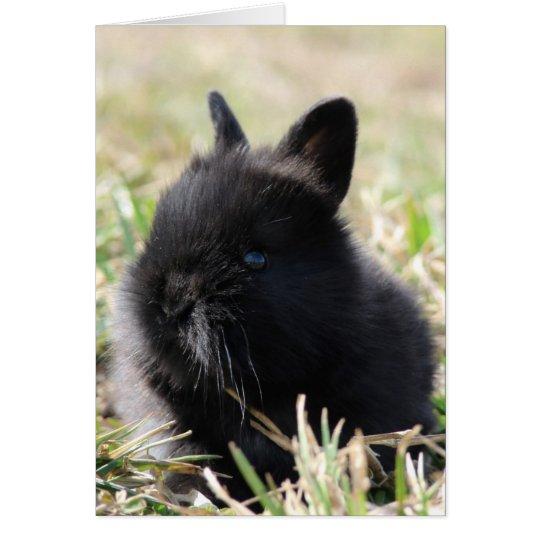 Baby Lionhead Bunny Card