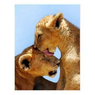 Baby lions love postcard