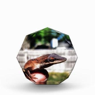 Baby Lizard Acrylic Award