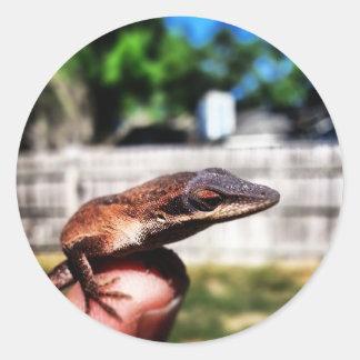 Baby Lizard Classic Round Sticker