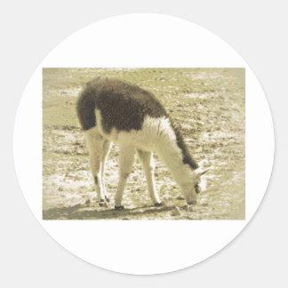 Baby Llama Drawing Classic Round Sticker
