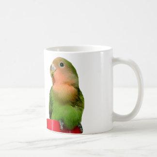 Baby lovebird mug agapornis roseicollis