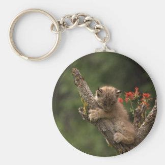 Baby Lynx Climbing Basic Round Button Keychain