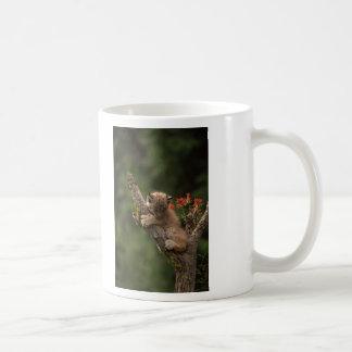 Baby Lynx Climbing Classic White Coffee Mug