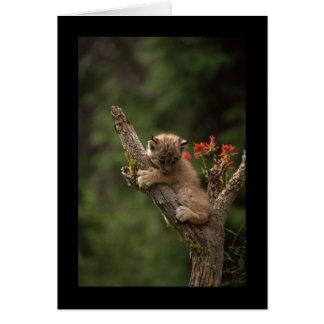 Baby Lynx Climbing Greeting Card