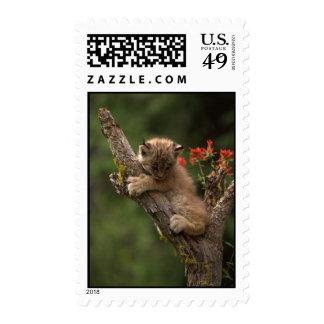 Baby Lynx Climbing Stamp