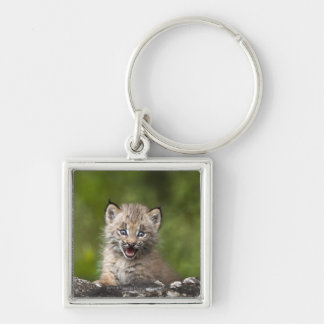 Baby Lynx  Looking Over A Fallen Tree Silver-Colored Square Keychain