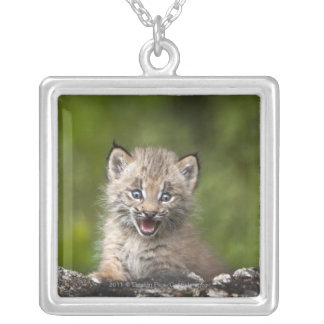 Baby Lynx  Looking Over A Fallen Tree Square Pendant Necklace