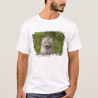 Baby Lynx  Looking Over A Fallen Tree T-Shirt