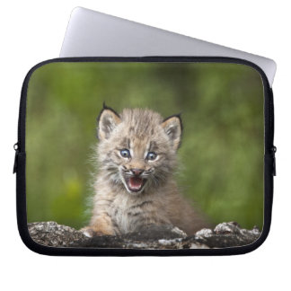 Baby Lynx (Lynx Canadensis) Looking Over A Computer Sleeve