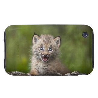 Baby Lynx (Lynx Canadensis) Looking Over A iPhone 3 Tough Covers
