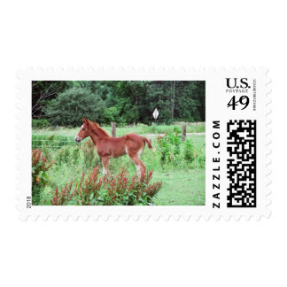 Baby Lynx Stamps