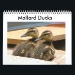 "Baby Mallard Ducks Calendar<br><div class=""desc"">I took all these photos and have incorporated them into this calendar.  I hope you enjoy the photos as much as I do!</div>"