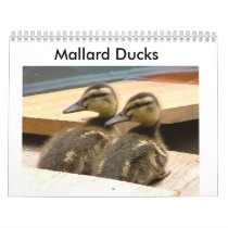 Baby Mallard Ducks Calendar