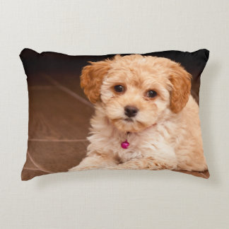 Baby Maltese poodle mix or maltipoo puppy dog Accent Pillow