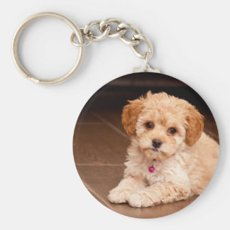 Baby Maltese poodle mix or maltipoo puppy dog Basic Round Button Keychain