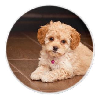 Baby Maltese poodle mix or maltipoo puppy dog Ceramic Knob